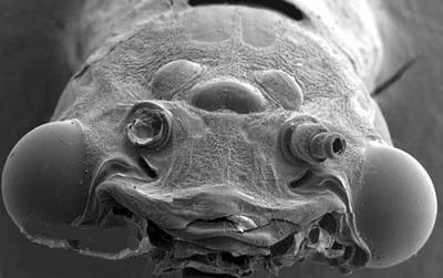 世界9大长相最奇怪的动物